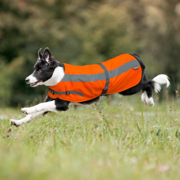 Flecta Hi-Vis Dog Jacket - Orange