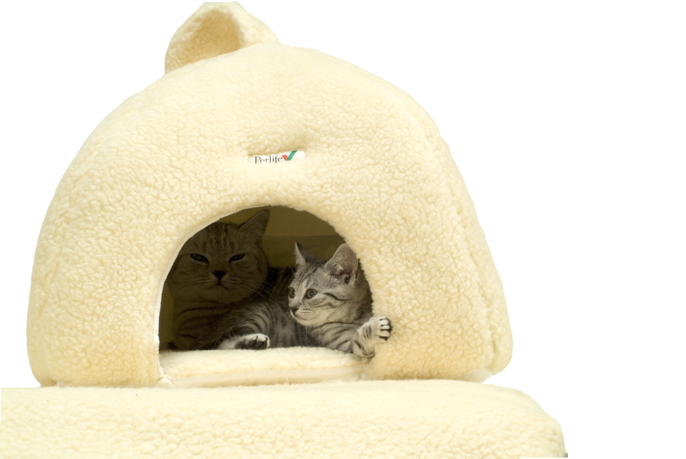 Pet Igloos Dogs