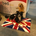 Dog on Union Jack at Crufts