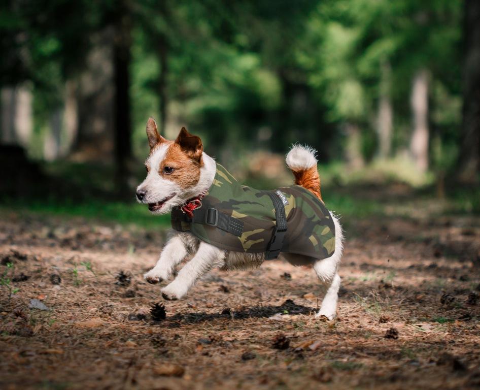 Hi Vis Dog Jacket Training