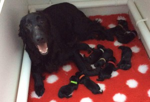 Maia and her 13 puppies