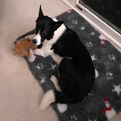 Monty on Christmas Vetbe