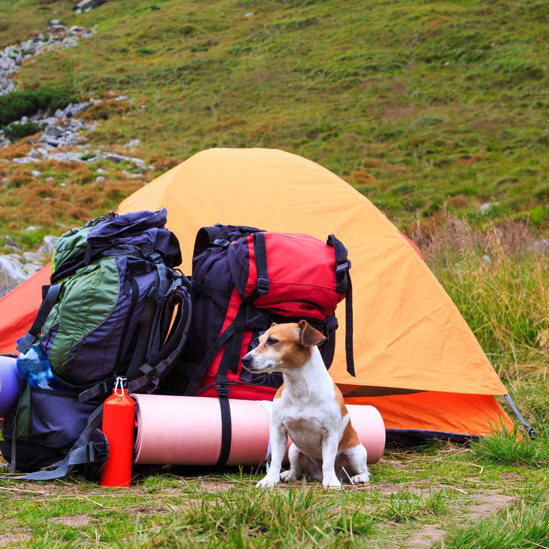 Top tips for camping with pets