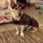 Flecta Dog Jacket